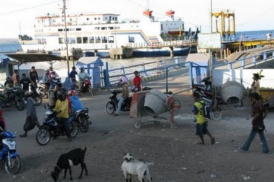 Goats, horses and total insanity - just your average port in Indonesia!