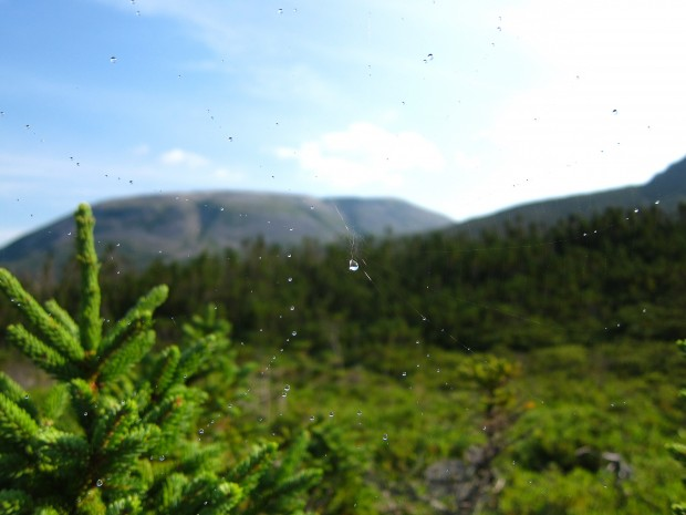 Gros Morne though a spider's web, Newfoundland